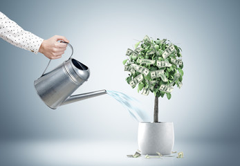 Businessman s hand watering a dollar tree
