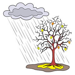 Seasons and trees, autumn rain