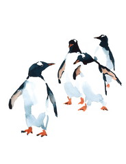 Penguins Watercolor Birds Antarctic Illustration isolated on white background