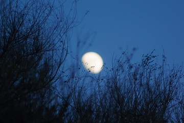 Overground bushes agains the night sky with the moon