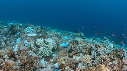 Coral bleaching occurs when sea surface temperatures rise.