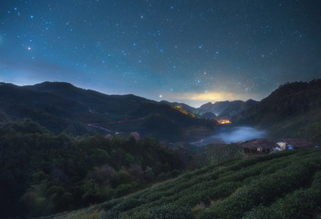 Nightscape at Tea plantation in the Doi Ang Khang, Chiang Mai, Thailand
