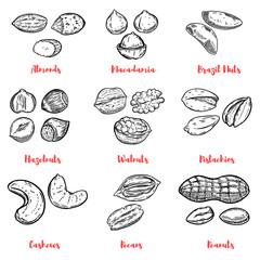 Set of nuts illustrations. Design elements for poster, menu. Vector illustration