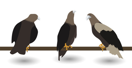 Set of silhouettes of fast living dangerous eagle on white Backg