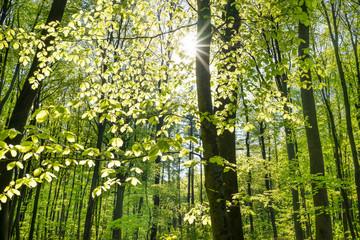 Sonne im Laubwald