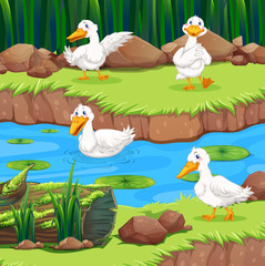 Four ducks in the river