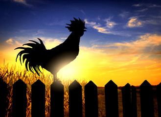 Rooster silhouette on fence
