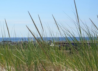 Dune Grass on Cape Cod, Massachusetts, New England
