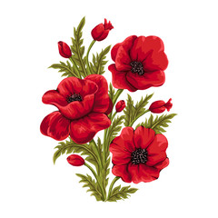 Vector bouquet of red poppies. Hand drawn illustration.Flower isolated on white background.