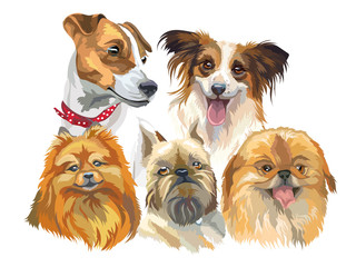 Set of small dog breeds