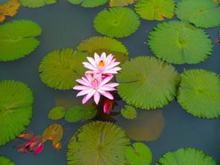 Flowers on Pond