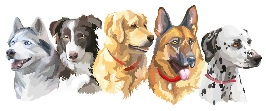 Set of big dog breeds