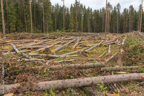 Is Deforestation Carvel Pines Lie On The Plot Timber Harvesting In