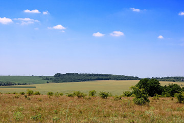 Meadows and fields in the summer