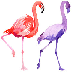 Sky bird flamingo in a wildlife by watercolor style isolated. Wild freedom, bird with a flying wings. Aquarelle bird for background, texture, pattern, frame, border or tattoo.