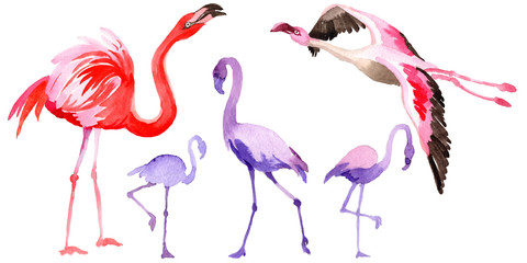Canvas Prints Flamingo Sky bird flamingo in a wildlife by watercolor style isolated. Wild freedom, bird with a flying wings. Aquarelle bird for background, texture, pattern, frame, border or tattoo.
