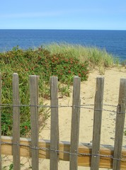 Fence, Sand and Plants on Cape Cod National Seashore, Massachusetts, New England