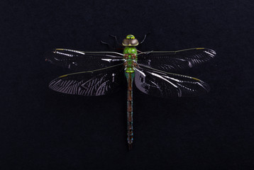 Close up macro image of a green dragonfly on a black background