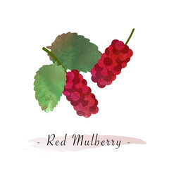 Colorful watercolor texture vector healthy fruit red mulberry