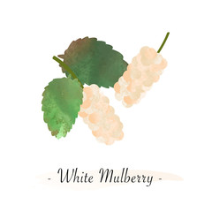 Colorful watercolor texture vector healthy fruit white mulberry