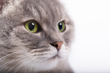 The head of the gray cat with green eyes looking up.