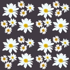 Daisy vector pattern. Beautiful flowers on black background.