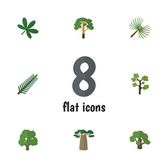 Flat Icon Bio Set Of Wood, Spruce Leaves, Baobab And Other Vector Objects. Also Includes Park, Timber, Evergreen Elements.