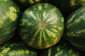 Many watermelons on the farm market. Local production, harvest.