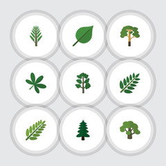 Flat Icon Bio Set Of Wood, Acacia Leaf, Tree And Other Vector Objects. Also Includes Acacia, Oak, Spruce Elements.