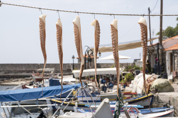 hanged octopuses drying on a line at the seaside