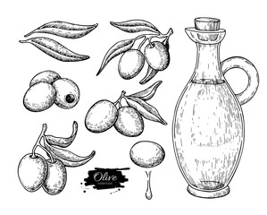 Olive oil bottle and olive branch. Vector Hand drawn illustration. Glass pitcher and food engraving isolated
