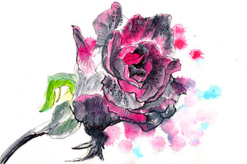 hand drawn watercolor painting rose