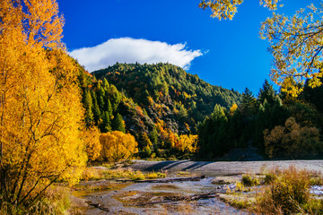 Tuinposter Nieuw Zeeland Autumn, Arrow River, Arrowtown, New Zealand