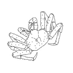 Alaska crab hand drawn sketch  illustrations of engraved line