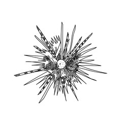 sea urchin hand drawn sketch  illustrations of engraved line