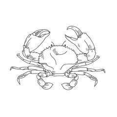 Sea crab hand drawn sketch  illustrations of engraved line