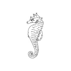 Seahorse hand drawn sketch  illustrations of engraved line