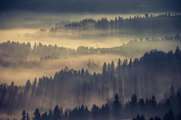 Spoed Fotobehang Ochtendstond met mist Misty forest landscape, panorama of Carpathian mountains in Poland