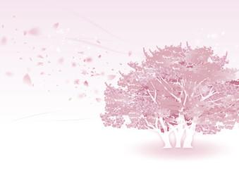 桜の木 ピンク