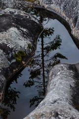 Kiefer Spiegelbild im Wasser, Schweden