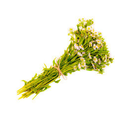 bouquet of chamomile isolated on white background closeup