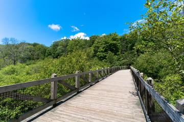Bridge into Forest