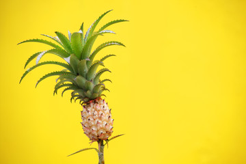 close up of young pineapple fruit on yellow background