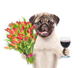 Pug puppy with a bouquet of tulips and wineglass. isolated on white background