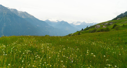 Green meadows and mountains in the Swiss valley.