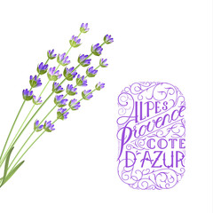 Wall Mural - The lavender elegant card with frame of flowers and text. Lavender garland for your text presentation. Label of soap package. Label with blossom flowers. Vector illustration.