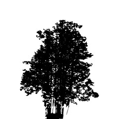 Black and White Silhouette of Deciduous Tree, whose branches dev