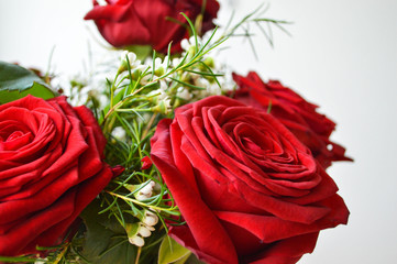 Red rose, the image of love