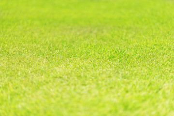 Nature green grass in the garden, Lawn pattern texture background, Perspective view