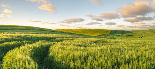 Photo sur Toile Sauvage Green, spring field, panorama